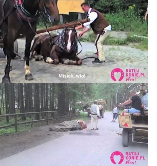 Kolaż dwóch zdjęć przedstawiających dwa konie leżące na trasie na Morskie Oko w Tatrach.