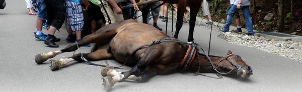 Zdjęcie przedstawia leżącego konia na trasie do Morskiego Oka.